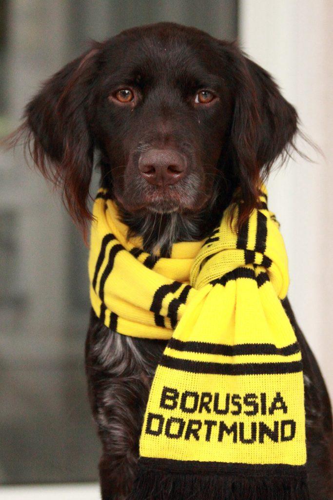 Borissua Dortmund Hund 683x1024
